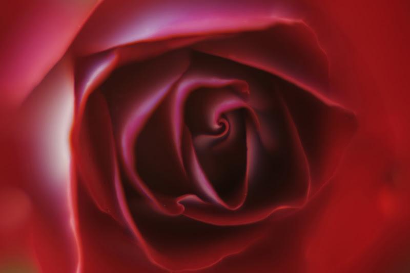 La rosa rossa di LauraFerrandes