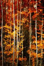 Photo: Exemple de #paintography - Voir le Portfolio Techniques Photo: http://www.naturephotographie.com/dt_portfolio/les-arbres-et-la-paintography/