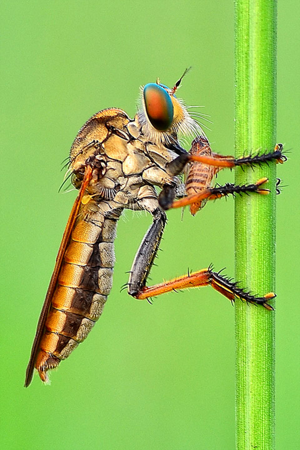 by Armando Loho - Animals Insects & Spiders