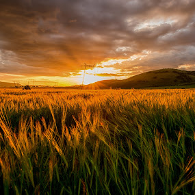 Summer sunset by Stefan Sorean - Landscapes Sunsets & Sunrises ( sky, harvest, sunrise, nature, rural, yellow, sun, summer, scene, agriculture, field, background, sunset, plant, farm, wheat, growth, grain, landscape, meadow, crop )