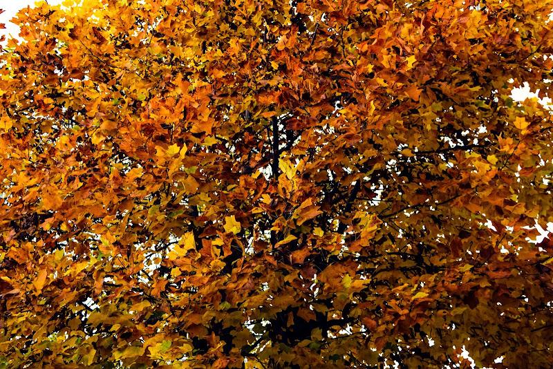 Fallinginlove. di M47OH