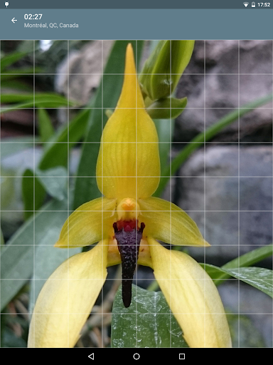 Jigsaw Puzzle: Flowers screenshot 12