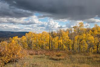 Photo: Aspens under stormy skies