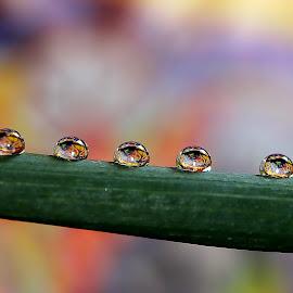 by Eni Zanic - Nature Up Close Natural Waterdrops
