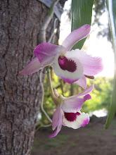 Photo: Orquídeas