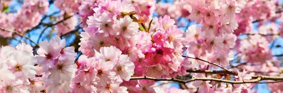 beautiful pink flowers with blue sky background