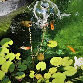 by Sherry Mathas-Gillespie - Animals Fish (  )