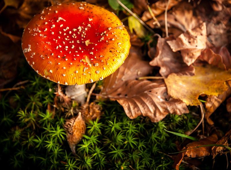 Colori e profumi d'autunno di Sergio Locatelli