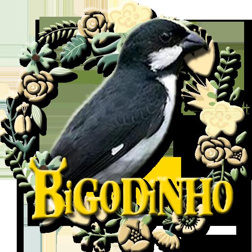 BIGODINHO CAMPEÃO