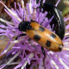 Beetle ?