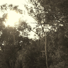 Country Lane by Sarah Harding - Novices Only Street & Candid ( sepia, nature, novices only, road, country,  )