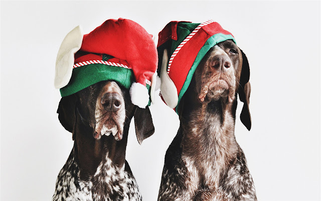 German Shorthaired Pointer Themes & New Tab