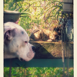 Jax and missi may by Tricia Kight - Animals - Dogs Portraits