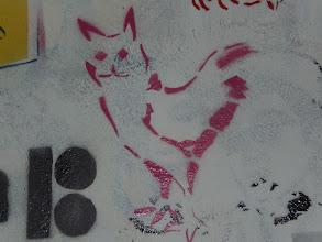 Photo: my chicken-cat!