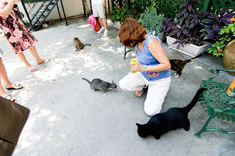 Photo: Cats at Hemingway House