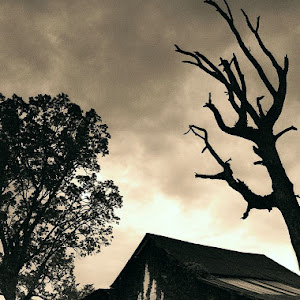 barn bordered by live and dead tree pixoto.jpg