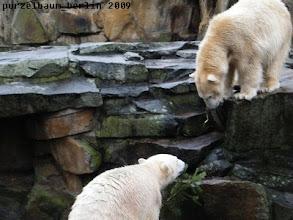 Photo: Knut wedelt mit einem Tannenzweig ;-)