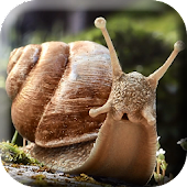 Snail 3d Real Live Wallpaper