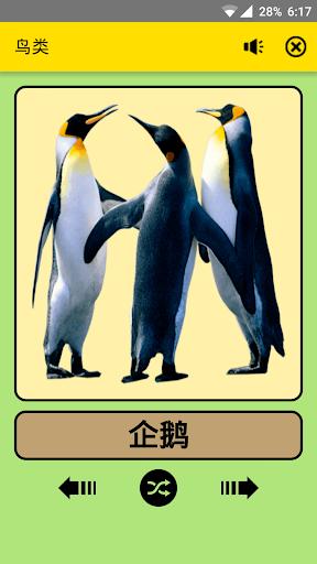 孩子们的的鸟