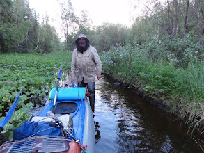 """Photo: Начали подъем по Няньворгаю, течение слабое, ручей зарос """"капустой"""", перекатики."""