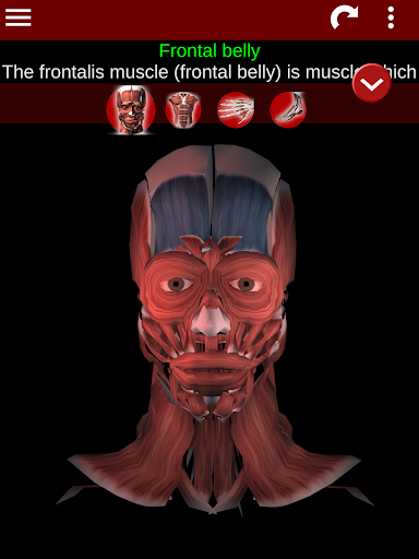 Muscular System 3D (anatomy) 2.0.8 Screenshots 17