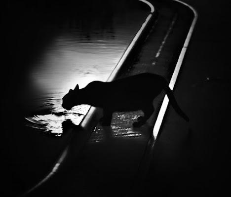 Nerone ... assetato di un gatto! di Manuela75
