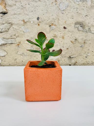 pot en béton pour plante d'intérieur