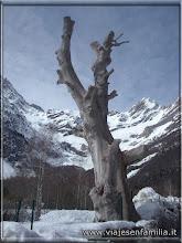 Photo: Arbol seco, Valle de Pineta-http://www.viajesenfamilia.it
