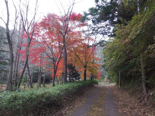 グリーンパークの紅葉