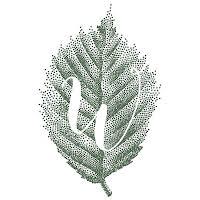 Wild Shropshire Restaurant logo