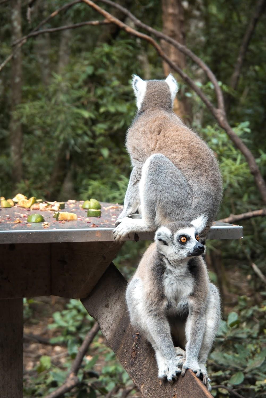 Monkeyland at Plettenberg Bay, South Africa