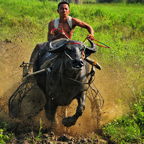 Carabao Race by Arnel Palor - People Street & Candids