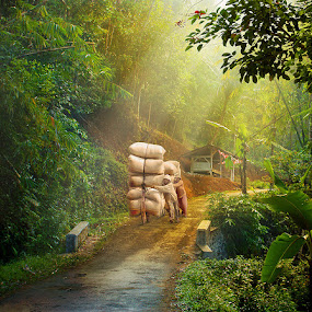 by Dadan Supardan - City,  Street & Park  Vistas