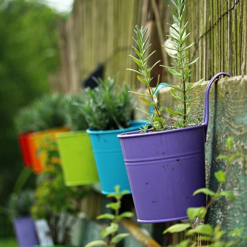 5 cuidados especiales para las plantas en verano