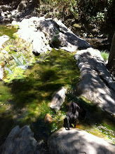 Photo: Malia hiking in Santa Barbara, CA