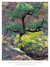 Photo: #TreeTuesday  Old Cottonwood Tree  This delightful old cottonwood tree is captured here in the cool reflected light of an autumn (fall!) afternoon in Zion Canyon. I took this shot almost exactly ten years ago - I'm wondering of the tree is still standing?  Deardorff 45 Special, Quickload back, Fuji Velvia 50 Pentax Digital Spotmeter Nikkor 300mm, 8s at f45, 81B warm-up