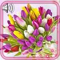 Tulips Bouquet HD Live Wallpaper icon