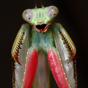 OMG! by Scott Thompson - Animals Insects & Spiders ( canon, macro, prayingmantis, mantis )