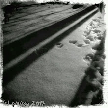 Photo: The beautiful, beautiful, shadows and snow on my back deck. Paw prints made by Ripsi, my terrier. The snow is now taller than he is. I love photography.