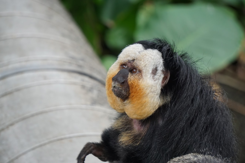 Moody Gardens Rainforest Pyramid Monkey