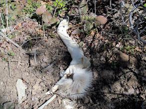 Photo: Deer remains