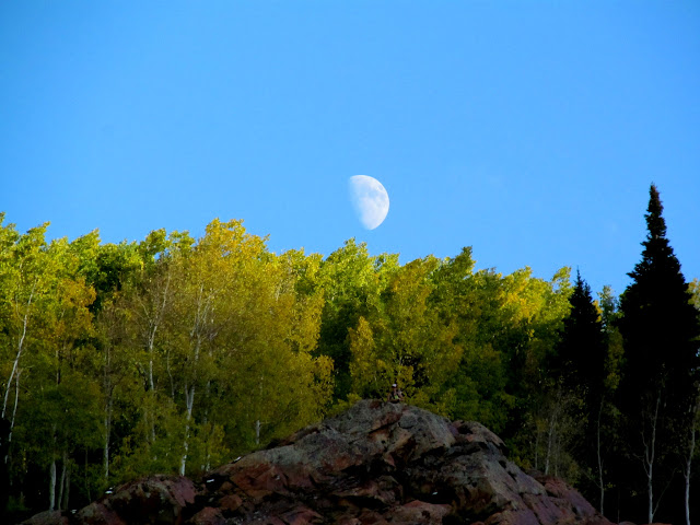 The moon over some aspen