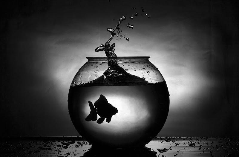 BlackFish di RobertaSilvestro