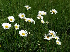 Photo: une prairie fleurie