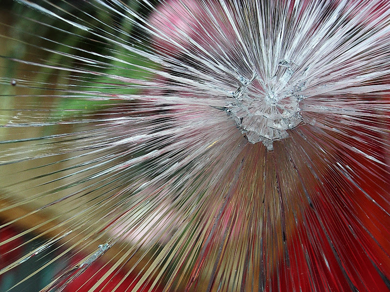 Fiore di GiBi