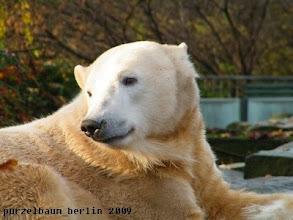 Photo: Wunderschoener Eisbaerjunge Knut :-)