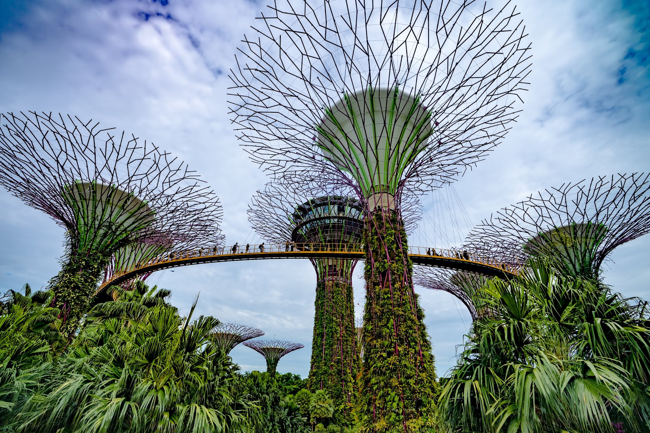 Singapore Gardens by the Bay Supertree Grove1