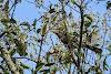 India. Kerala Motorbike Road Trip. Malabar Grey Hornbill, Thekkady