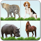 Animal Memory Matching Game
