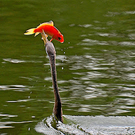 by Quy Truong Dinh - Animals Birds
